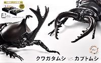 フジミ自由研究いきもの編 クワガタムシ vs カブトムシ 対決セット ゴールド仕様