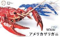 フジミ自由研究いきもの編 アメリカザリガニ ホワイト