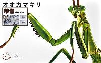 フジミ自由研究いきもの編 オオカマキリ 茶色バージョン
